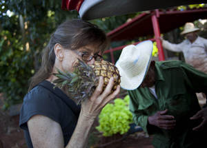 "Photo - In this Dec. 8, 2012 photo, U.S. chef Kelsie Kerr smells a pineapple while shopping for fruit and vegetables at a farm in Havana, Cuba. Kerr traveled to Cuba with the California based ""Planting Seeds"" delegation that held give-and-take seminars with chefs and culinary students about slow food. Cuba has a longstanding culture of organic farming by necessity. During the ""Special Period"" of the 1990s, many private urban plots popped up in Havana amid austerity after the collapse of the Soviet Union. Unlike in the United States, pesticide-free is largely the rule here rather than the exception, mostly due to a lack of supply. (AP Photo/Ramon Espinosa)"