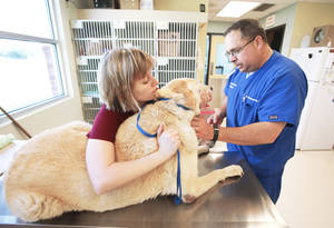 photo - Veterinary technician Melissa Ligon and veterinarian Richard Hufnagel give Boomer an exam Tuesday at the Pet Medical Center of Edmond. Fleas are not a problem for Boomer, but Hufnagel and other vets say flea infestations are prevalent this spring. Photo by Steve Gooch, The Oklahoman