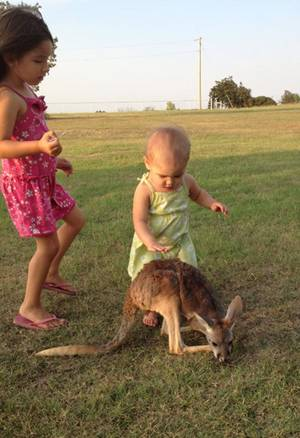photo - An undated photo provided by the Menhusen family shows kangaroo Lucy Sparkles, center, with Layla Menhusen, left, and Indya Menhusen, right. The Menhusen family is searchng for their pet, Lucy Sparkles, which the family last saw on Thanksgiving, when Sheila Menhusen says she thinks the red kangaroo was freaked out by people gathered at their home near Shawnee, Okla.,  for the holiday. The family is offering a $500 reward. (AP Photo/The Menhusen family) Family provided us with photos. I emailed the mom, Shayla Menhusen, the formal email asking for permission. Haven't heard back yet. Jeannie Nuss Reporter The Associated Press Little Rock, Ark. ORG XMIT: NY118