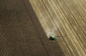 Photo - A combine harvests corn in a field near Coy, Ark.  AP Photo