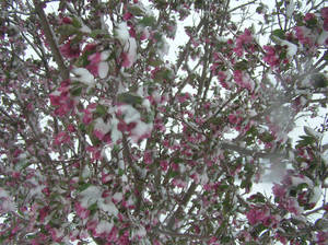 Photo - A reader submitted this photo of snowy weather in Oklahoma Friday, March 27, 2009.