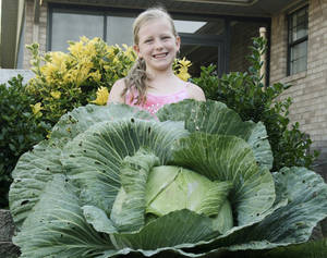 Photo - Winni Hiebert's huge cabbage allowed the Miami third-grader to walk away with a $1,000 savings bond earmarked for her college education as part of the Bonnie Plants Cabbage Program. Photo Provided