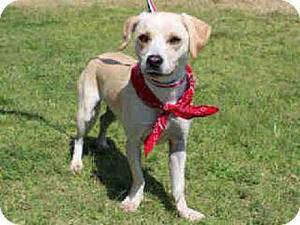 Photo - Freya is a beagle-lab mix who likes to be petted and receive attention. She is 4 years old and weighs about 30 pounds. She is available at the Edmond Animal Welfare Shelter. PHOTO PROVIDED