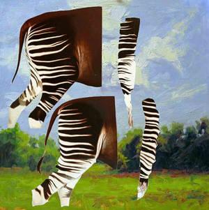 "Photo - ""The Color of Okapi"" by Scott Henderson. Photo provided."