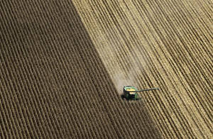 Photo -   A combine harvests corn in a field near Coy, Ark., Thursday, Aug. 16, 2012. Federal weather forecasters say drought conditions appear to be leveling off, although it is likely to continue at least through November. (AP Photo/Danny Johnston)