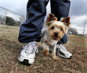 photo - Left: Tim Cooter's Yorkshire terrier Watson takes a walk in the newly expanded dog park at 12th Avenue NE and Robinson Street in Norman. PHOTO BY STEVE SISNEY, THE OKLAHOMAN