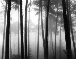 "Brett Weston's ""Pines in Fog, Monterey, 1963"" was part of the Oklahoma City Museum of Art's 2008 exhibit ""Brett Weston: Out of the Shadow."""