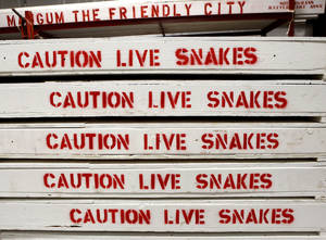 Photo - Crates containing live snakes are stacked in a building in preparation for this weekend's annual Rattlesnake Derby in Mangum.  (Photo by Jim Beckel, The Oklahoman)