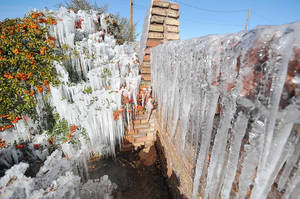 Photo - Icicles develop along a brick wall and on bushes as water from the sprinkler system freezes at a home on the corner of Willow Street and Peach Avenue in Hesperia, Calif, on Monday, Jan. 14, 2012. The extreme chill in the West comes as the eastern U.S., from Atlanta to New York City, is seeing spring-like weather. (AP Photo/The Victor Valley Daily Press, David Pardo) ORG XMIT: CAVIC101