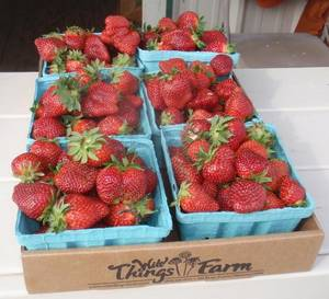Photo - Wild Things Farm strawberries. (Photo by Happy Frazier)