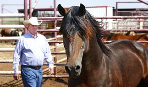 Photo - Bennie Beutler and the award-winning rodeo bareback horse Commotion are shown at Beutler's ranch near Elk City.  <strong>David McDaniel - The Oklahoman</strong>