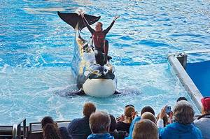 Photo - Dawn Brancheau, a whale trainer at SeaWorld Adventure Park, shown performing on December 30, 2005, was killed in an accident with a killer whale at the SeaWorld Shamu Stadium Wednesday afternoon, February 24, 2010. (JULIE FLETCHER/ORLANDO SENTINEL FILES)