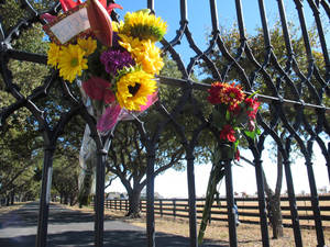 Photo -   Southfork Ranch can be seen through a gate where fans left flowers Saturday, Nov. 24, 2012, in Parker, Texas. The flowers were in memory of Larry Hagman, who played J.R. Ewing on the TV series Dallas, set at Southfork. Hagman died Friday, Nov. 23, 2012 in Dallas. He was 81. (AP Photo/Angela K. Brown)
