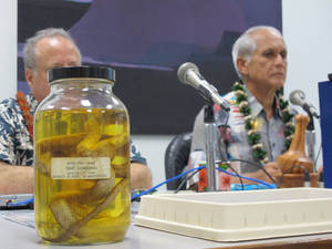 Photo - A brown tree snake preserved in liquid sits on the table at a Senate Energy and Environment Committee hearing in Honolulu on Friday, Jan. 11, 2013 presided over by Committee Chairman Sen. Mike Gabbard, right. An Agriculture Department official told the committee pests hitchhiking in 40 imported commodities like lettuce and cut flowers account for 90 percent to 95 percent of the pests and potential invasive species entering Hawaii. (AP Photo/Audrey McAvoy)