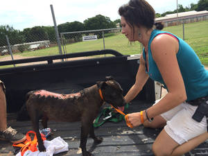 Photo -  Jamie Gerken, of Free to Live, tends to a dog that was dragged behind a Jeep in Logan County. Photo provided  <strong> -  Photo courtesy of Free to Live  </strong>