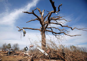 photo - A large oak tree is seen damaged in the Majestic Hills neighborhood north of Ardmore on Thursday.  PHOTO BY SARAH PHIPPS, THE OKLAHOMAN