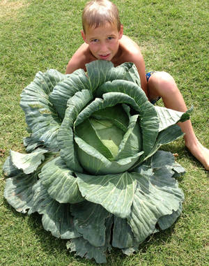 Photo - Canton Elementary third-grader Hudsen Scott grew a giant cabbage  which helped him be selected for a $1,000 scholarship.      <strong> - PROVIDED</strong>