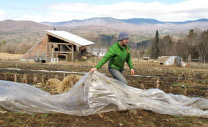 Photo - FILE - In this April 24, 2014, file photo,, Katie Spring rolls up plastic that was used to cover certain plants during the winter in a field at the Good Heart Farmstead in Worcester, Vt. Spring and her husband Edge Fuentes, who both own the farm, back the GMO labeling bill passed by the Vermont legislature. Genetically modified foods have been around for years, but most Americans have no idea if they are eating them. The Food and Drug Administration says they don't need to be labeled, so the state of Vermont has moved forward on its own. On May 8, Gov. Peter Shumlin signed legislation making the state the first to require labeling of GMOs _ technically genetically modified organisms. (AP Photo/Wilson Ring, File)