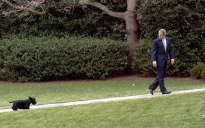 photo - FILE - In this Feb. 3, 2003 file photo, President Bush slows his pace to wait for his dog Barney as he walks to the Oval Office at the White House in Washington, Monday, Feb. 3, 2003. Barney, former White House Scottish Terrier and star of holiday videos shot during President George W. Bush's administration, has died after suffering from cancer, the former president announced in a statement Friday, Feb. 1, 2013. He was 12. (AP Photo/J. Scott Applewhite, File)