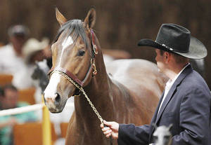 photo - A Dash of Sweet Heat is led into the sales ring Thursday by an employee of Heritage Place in Oklahoma City. The filly sold at the auction for $1 million.  AP PHOTO
