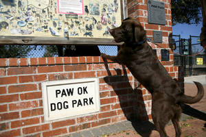 photo - A dog named Kate looks at the bulletin board outside Paw Park near Lake Hefner in Oklahoma City on Monday. The park was named one of the 10 best in the country by Dog Fancy magazine. By John Clanton