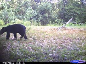 photo - This bear was caught on film in Cherokee County <strong>Gary Hardesty - PHOTO PROVIDED</strong>