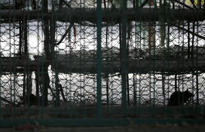 Photo - Rats infest the empty chicken cages at a live poultry wholesale market in Shanghai, China Wednesday, April 10, 2013. China says two more people have died of a new strain of bird flu, bringing the death toll to nine. Shanghai has suspended sales of live poultry. (AP Photo/Eugene Hoshiko)