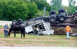 Photo - A horse stands next to an overturned tractor trailer that was transporting horses Tuesday morning on the Kilpatrick Turnpike. Photo by Paul B. Southerland
