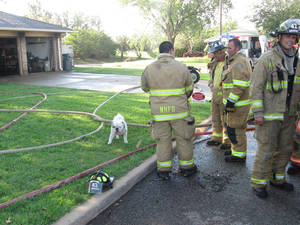 Photo - Mack the bulldog roams the yard while firefighters extinguish the blaze at the home in The Village. <strong></strong>