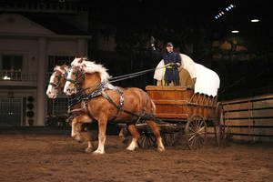 Beautiful horses appear in the arena often during Dolly Parton's Dixie Stampede. Photo provided by Dolly Parton's Dixie Stampede <strong></strong>