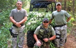 Photo - Marshal Brian Catcher, Lt. Mike Roach and Capt. Danny Tanner with marijuana plants recovered Wednesday in the Kenwood area. (Delaware County Journal photo)