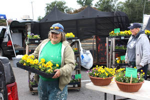 Photo -  Anna Matthews, left, loads her pickup with flats of pansies at last year's Norman Farm Market. This year's market opens Saturday. OKLAHOMAN ARCHIVE PHOTO  <strong>Lynette Lobban</strong>