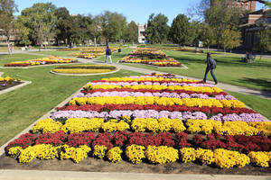 Photo - OU / FLOWERS: Students walking past chrysanthemums planted on the south oval on the University of Oklahoma campus in Norman Wednesday, Oct. 20, 2010. Photo by Paul B. Southerland, The Oklahoman