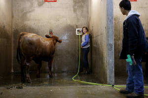 Photo - Kylee Henderson, 13, talks with Luke White, 12, of Checotah,  after washing her heifer, Nicole,  on Saturday during the Oklahoma Youth Expo.
