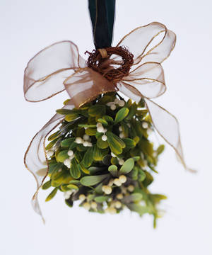 Photo - The mistletoe is Oklahoma's state floral emblem. PHOTO PROVIDED