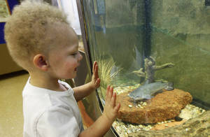Photo - Asher McCroskey, 2, studies a catfish Wednesday at the Martin Park Nature  Center. The Martin Park Nature Center opens at 8 a.m. Saturdays through July 29 so people can enjoy the park earlier. Photos by David McDaniel, The Oklahoman