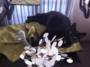 photo - Onyx is one of about 80 animals Best Friends of Pets hopes will be adopted during the group&#039;s three-day adoption marathon in Moore. The event runs from Friday through Sunday. &lt;strong&gt; - PHOTO PROVIDED&lt;/strong&gt;