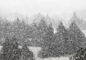 photo - A heavy snow falls in north Oklahoma City, OK, Tuesday, February 12, 2013, By Paul Hellstern