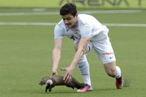 photo - Zurich soccer player Loris Benito tries to catch  a marten during the Swiss  Super League  match between FC Thun and FC Zurich in the stadium in Thun, Switzerland, Sunday March 10, 2013.  (AP Photo/Keystone,Marcel Bieri)