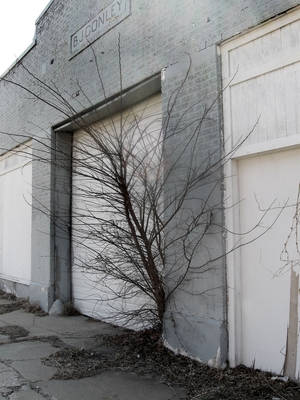 Photo - Trees are growing from several sections of the decades old gas station at NW 10 and Harvey. Photo by Steve Lackmeyer, The Oklahoman