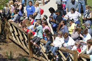 Photo - Visitors line up to see the elephants during Malee's first birthday celebration at the Oklahoma City Zoo.