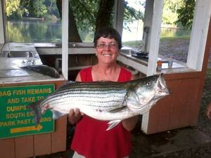 Photo - Janet Howard of Chickasha caught this 15-pound striper at Lake Texoma in June. Send your hunting and fishing photos to egodfrey@opubco.com. <strong></strong>