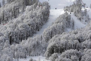 Photo - A gondola passes a stand of trees after an overnight dusting of snow during snowboard parallel giant slalom qualifying at the Rosa Khutor Extreme Park, at the 2014 Winter Olympics, Wednesday, Feb. 19, 2014, in Krasnaya Polyana, Russia. (AP Photo/Andy Wong)