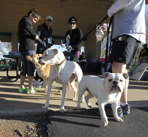 photo - Dogs and their owners prepare to begin the Doggie Dash 5k run at J.L. Mitch Park in Edmond. The event was a fundraiser created by a woman who is going to India to teach orphans. PHOTO BY PAUL HELLSTERN, THE OKLAHOMAN. <strong>PAUL HELLSTERN - OKLAHOMAN</strong>