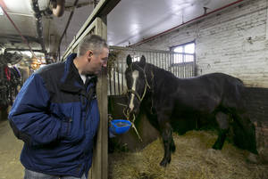 Photo - FILE - In this Jan. 28, 2014 file photo, carriage horse owner Stephen Malone looks in on his horse Tucker in his stall at New York's Clinton Stables. Malone said Monday, June 9, 2014. that there were no injuries to the horse or any people when a startled carriage horse took a jaunt around New York's Central Park. (AP Photo/Richard Drew, File)