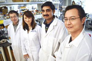 photo - Scientists and researchers Yunzhou Dong, Hong Chen, Satish Pasula and Xiaofeng Cai made a recent discovery that could help improve cancer therapy. Photo by Jaclyn Cosgrove, The Oklahoman