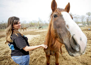 Photo - Natalee Cross pets a rescued horse.  PHOTO BY CHRIS LANDSBERGER, THE OKLAHOMAN