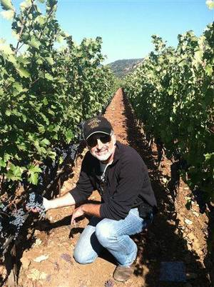 Photo - This undated publicity photo provided by courtesy of Covenant Wines shows winemaker, Jeff Morgan, sampling Solomon grapes in the Covenant Wines vineyard in Napa Valley, Calif. (AP Photo/Courtesy Covenant Wines)