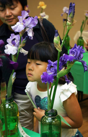 Photo -  Elizabeth Yue, 5, takes in the scent, as well as color, of irises at the annual Norman Iris Show at the Norman Public Library. PHOTO BY LYNETTE LOBBAN, FOR THE OKLAHOMAN  <strong></strong>