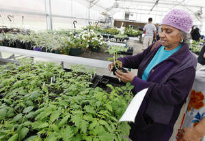Photo - Josephine Wilson, of Oklahoma City, looks at plants during a sale at Oklahoma Centennial Mid-High School. Photo by Paul B. Southerland, The Oklahoman
